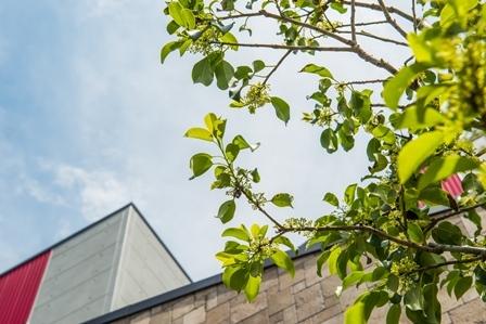 09.シンボルツリーのソヨゴ君から望む風景